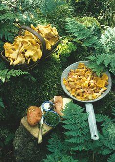 Chanterelles a la Forestierre l Cantharellus Cibarius l from the Roger's Mushrooms App l #chanterelle #mushroom #fungi #recipe l www.rogersmushrooms.com