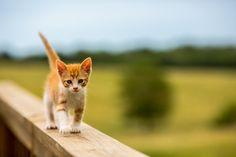 Max-Walking   Flickr - Photo Sharing!