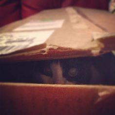 félix inside a box.