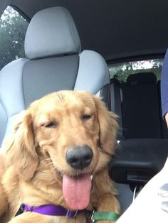I swear we went to the dog park and not the dispensary #cute #dogs #dog #aww #puppy #adorable