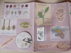 Plant Lap Book - in another language, but lots of good ideas!