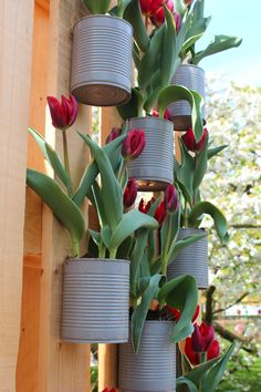 this gives me great ideas. good for someone who rents and doesn't want t have to dig bulbs up when moving  DIY garden idea. Paint tin cans and fasten them to a fence. Put some flowers in it!