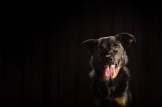 14_Dog_Portraits_Pet_photography_Denver_Studio-1743.jpg