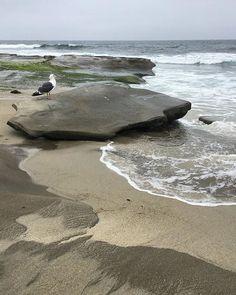 Sunday brunch 'n beach adventures, with San Diego's June Gloom in full effect.  #weekendadventures #staycation #beachfriends #brunch #beach #sundayfunday #sundaybrunch #lajolla #sandiego #pacificbeach #sea #ocean #seashore #seaside #seagull #coast #coastal #shore #lajollashores #california #californialove #instahappy #instagood #instacool #junegloom #lajollalocals #sandiegoconnection #sdlocals - posted by Charlotte  https://www.instagram.com/charzart. See more post on La Jolla at…