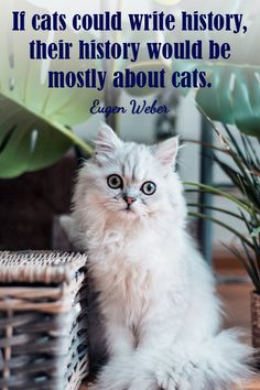 #catquotes #catquote #cat #cats #catlover #catlovers #catlove #catlife #catloversclub #catslover #crueltyfreeblogusa Cat Love Quotes, Cat Life, Funny Cats, Cat Lovers, Writing, History, Animals, Historia, Animales