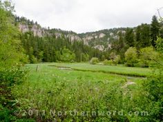 Meadow and stream just east of Roughlock Falls in the Spearfish Canyon area of South Dakota. In early spring, every leaf was new and dripped with recent rains.