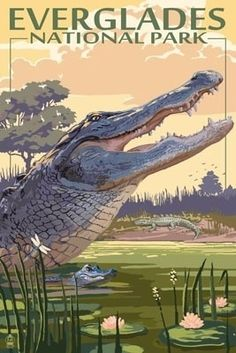 The Everglades National Park, Florida - Alligator Scene - Lantern Press Poster Ailleurs communication, www.ailleurscommu... Jeux-concours, voyages, trade marketing, publicité, buzz, dotations Harness the Power of FB today!! Visit http://jvz1.com/c/459377/217569 for more...