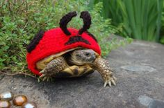 Who wouldn't giggle about a snail in a cozy?! And his turtle/ladybug buddy?