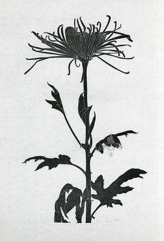 ✦   henry evans   -   'chrysanthemum'  -  linocut  -  1964