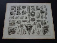 Original 1849 antique anatomy print  old by DecorativePrints