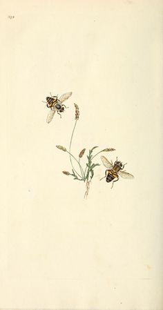 v. 16 (1813) - The natural history of British insects : - Biodiversity Heritage Library
