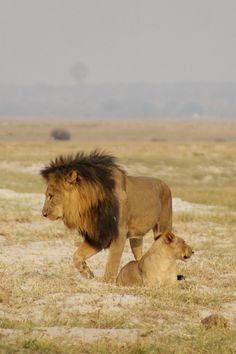 Spectacular Wildlife, Culture and Exquisite Views. Visit Chobe, the Makgadikgadi Pans, Moremi, the Okavango Delta, and the Victoria Falls with Africa Safari Camps; www.africasafaricamps.com & www.facebook.com/AfricaSafariCamps.