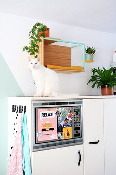Have pets at home? Hack some IKEA items for them to make comfy and stylish pet furniture of various kinds. Here are mostly hacks for cats but there are some for dogs too. Ikea Box Shelves, Diy Cat Shelves, Ikea Boxes, Pet Furniture, Apartment Furniture, Furniture Layout, Furniture Market, Furniture Movers, Studio Apartment