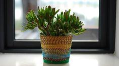 Además de decorar un ambiente, las plantas cumplen una función vital: absorben del aire sustancias contaminantes dañinas para la salud. Un experto te recomienda cuáles son las más idóneas.