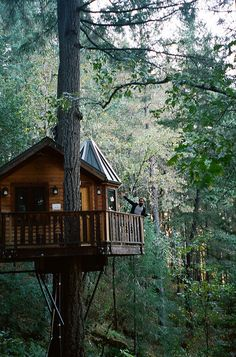 I want to live in a tree.