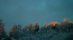 Latvia/ Latvija winter morning. Latvia Country, Mountains, Winter, Nature, Travel, Winter Time, Naturaleza, Viajes, Destinations