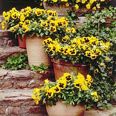 The happy faces of these budget blooms will brighten your containers and borders. See all the ways you can incorporate them into your décor.