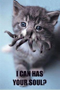 kitty kitty kitty..
