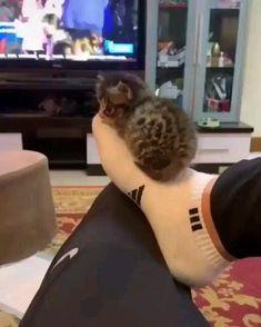 Baby Animals Super Cute, Cute Baby Cats, Cute Little Animals, Cute Cats And Kittens, Kittens Cutest, Cute Babies, Funny Cute Cats, Funny Animal Jokes, Funny Cat Videos