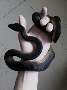 This two colors snake would scare the soul out of me.