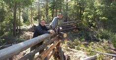 Log fence building in the bush