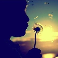 Make a wish and let it take flight into the world and hope it will come back to you fullfilled.