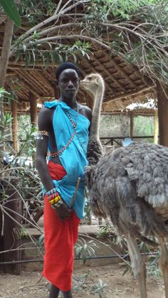 This Samburu boy saved the ostrich, since then continues to care for him, while parading around tourists to get a bit of cash.
