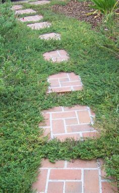 Brick Stepping Stone Pathway with Creeping Thyme-this what i want in my back yard next to the concrete path, maybe diff stones