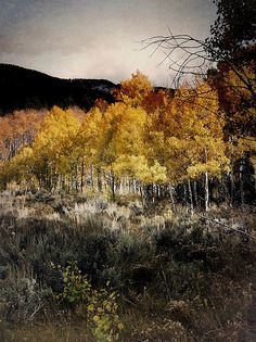 Hiking the Acorn Creek Trail near Silverthorn, Colorado with the aspen trees in all of their golden splendor  © Jim Hill