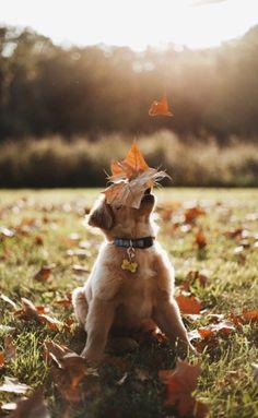 Fall Aesthetic, Inspiring Fall Quotes, fall spirit, fall season, artmotivator, артмотиватор, fall vibes, autumn aesthetic, fall inspiration, Fall Images, fall pictures, fall mood, autumn quotes, fall quotes, inspirational quotes, positive quotes