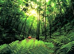 Fern Gully (Forest), Ocho Rios, Jamaica - Here is the actual site about it - thttp://www.jamaicatravelandculture.com/destinations/st_ann/ocho_rios/fern-gully.htm