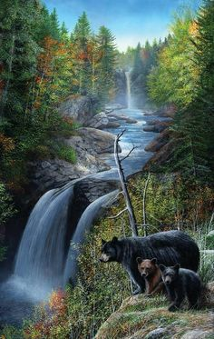 Shop American Expedition Jigsaw Puzzles - Bear at the Waterfall 550 Piece Puzzle - Gather the family for a new wildlife puzzle Bear Paintings, Wildlife Paintings, Wildlife Art, Original Paintings, Bear Pictures, Animal Pictures, Image Nature, Bear Art, Black Bear