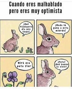 Optimista Mal Hablado Memes Memes Divertidos Meme Gracioso