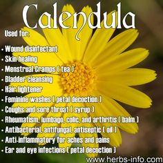 ❤ Click the link to learn all about the many herbal uses and benefits of Calendula! ❤
