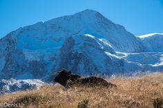 Pra gra -le Pigne d'Arolla Wallis, Photos, Mountains, Nature, Travel, Cabin, Blue, Pictures, Naturaleza