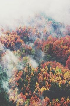 Autumn Forest | Hiking Dreams & Inspiration