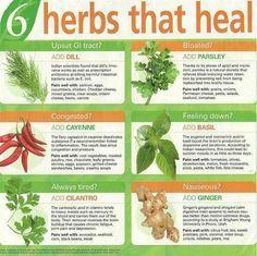 6 Herbs that Heal