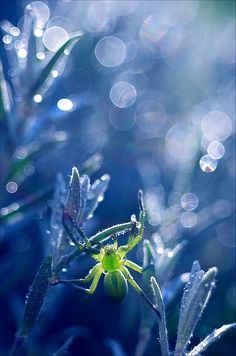 80 Stunning Macro Photographs By Magdalena Wasiczek — Photography Office Photography Office, Bokeh Photography, Amazing Photography, Color Photography, Photographie Bokeh, A Bug's Life, Happy Paintings, Beautiful Creatures, Wonders Of The World