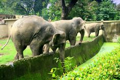 Alipore #Zoo #Kolkata - A Fun Place for Children and Child-Like #Adults - It has been in existence since 1876 as the primary source for the conservation of the wild #animals and an effective avenue for the residents of Kolkata to show their #children the various animals that are held here in captivity. #travel #wildlife #ttot
