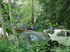 Forgotten VW Salvage Yard With Group of Volkswagen Bugs Hidden in The ...
