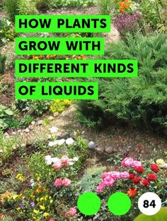 How Plants Grow with Different Kinds of Liquids. Plants require a basic combination of ingredients to grow. The primary needs of plants include sunlight, air, water and soil. In addition to the basics, you can help plants grow even larger by adding extra nutrients to the water. Experiment with your plants and see how various liquids affect your...