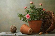 Rosas: a flor clássica. Suas cores possuem até mesmo significados especiais. São tão adoradas que muitas pessoas as cultivam em jardins ou mesmo em vasos. A rosa é um arbusto de folhas semi-decíduas em algumas regiões de clima mais ameno....