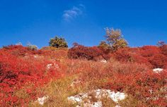 Carso d'autunno (sommaco)