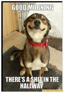 Men's and Women's Humor : Off Beat Dog Humor..