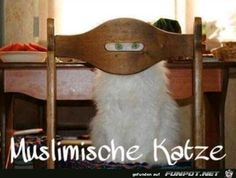 funpot: Katze.png von Friedi