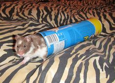 Hamster toys and accessories from recycled household items thread - Page 2 - Hamster Central