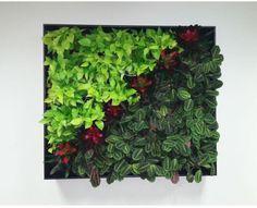 Long Term Plants (7).jpg