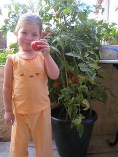 faire pousser des tomates dans un pot #jardinage #tomate #pot