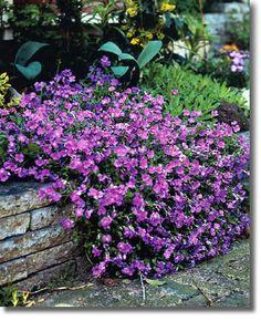 I also love rock walls Flowers Perennials, Rose Cottage, Small Gardens, Garden Planning, Diy Flowers, Horticulture, Backyard Landscaping, Garden Inspiration, Beautiful Gardens