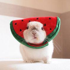 animales beb bonitos Bunny in a watermelon hat - how cute! Cute Baby Bunnies, Funny Bunnies, Cute Babies, Animals And Pets, Funny Animals, Bunny Costume, Cute Little Animals, Tier Fotos, Cute Creatures
